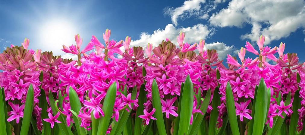Clínica Dental Odontic te ayuda a sentirte bien en Primavera